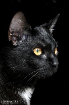 """Photo animaliste - """"Chat noir"""" - Les Exploité.e.s, Florence Dellerie"""