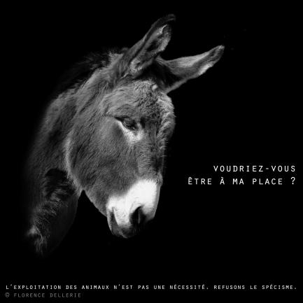 """Visuel animaliste """"En noir et blanc"""" - Âne, Florence Dellerie"""