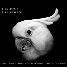 """Visuel animaliste """"En noir et blanc"""" - Cacatoès, Florence Dellerie"""
