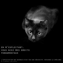 """Visuel animaliste """"En noir et blanc"""" - Chat noir, Florence Dellerie"""