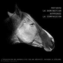 "Visuel animaliste ""En noir et blanc"" - Cheval, Florence Dellerie"