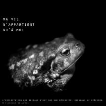 """Visuel animaliste """"En noir et blanc"""" - Crapaud commun, Florence Dellerie"""