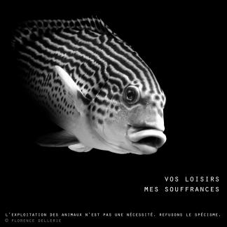 "Visuel animaliste ""En noir et blanc"" - Gaterin, Florence Dellerie"