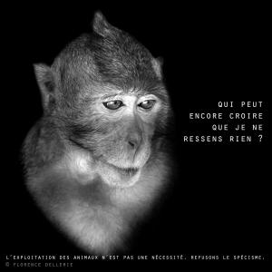 """Visuel animaliste """"En noir et blanc"""" - Macaque, Florence Dellerie"""