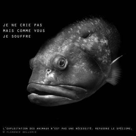 """Visuel animaliste """"En noir et blanc"""" - Mérou, Florence Dellerie"""