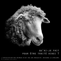 """Visuel animaliste """"En noir et blanc"""" - Mouton, Florence Dellerie"""