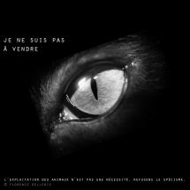 """Visuel animaliste """"En noir et blanc"""" - Oeil de chat, Florence Dellerie"""