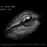 "Visuel animaliste ""En noir et blanc"" - Rainette, Florence Dellerie"