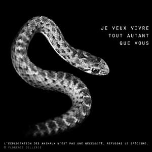"""Visuel animaliste """"En noir et blanc"""" - Serpent, Florence Dellerie"""