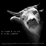 """Visuel animaliste """"En noir et blanc"""" - Vache, Florence Dellerie"""