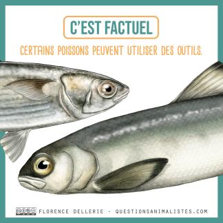 image_poissons_utilisation_outils_florence_dellerie