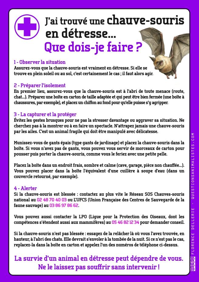 vegan_urgence_chauve-souris_detresse_dellerie