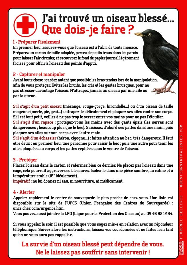 vegan_urgence_oiseau_blesse_dellerie